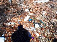 garbage,environment, lake Lanier, shore sweep, adopt a shoreline, glass, plastic, clean up, Georgia, pollution, green, air, mother earth,